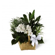 Sympathy & Funeral Flower Delivery